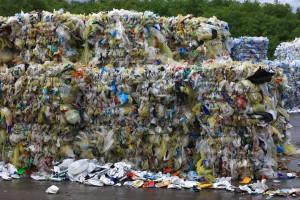 Journée Mondiale de l'Environnement !